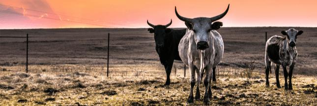 Les fermes d'élevage, des nids à superbactéries résistantes aux antibiotiques ?