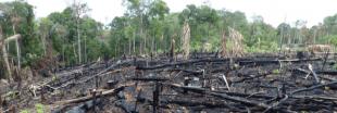 Députés et ONG appellent à bloquer les 'complices de la déforestation' en Amazonie