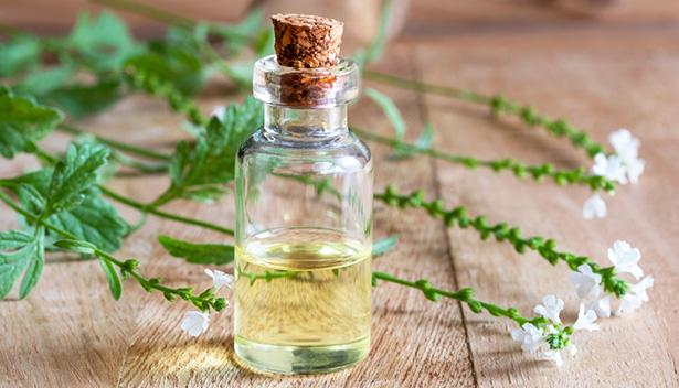 verveine bienfaits peau, verveine odorante, verveine officinale