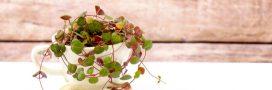 Plantes d'intérieur : que faire en septembre