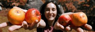 Les 11 aliments qu'il faut absolument consommer bio