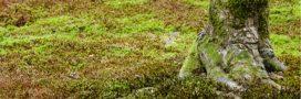 Astuces naturelles contre la mousse: les bonnes et mauvaises méthodes