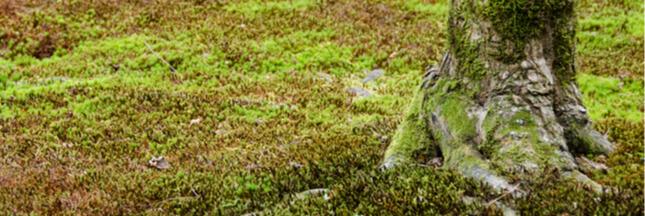 Astuces naturelles contre la mousse : les bonnes et mauvaises méthodes