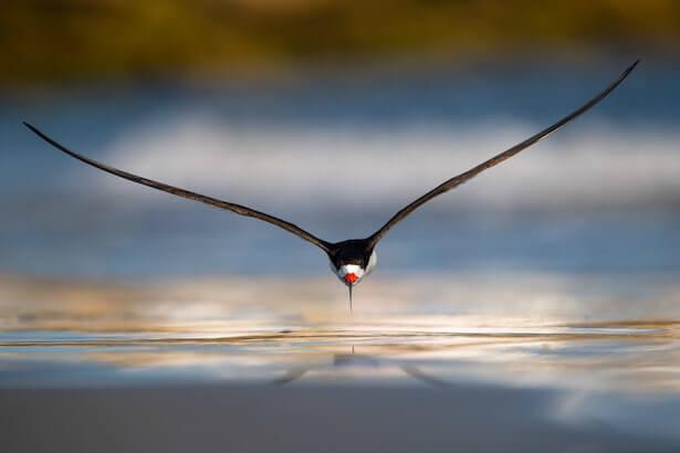 concours Bird Photography