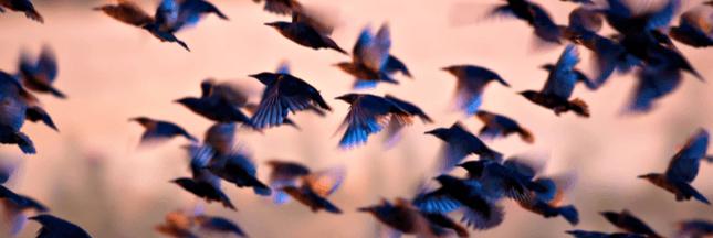 3 milliards d'oiseaux ont disparu en Amérique du Nord depuis 1970