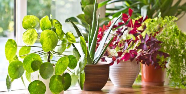plantes d'intérieur septembre