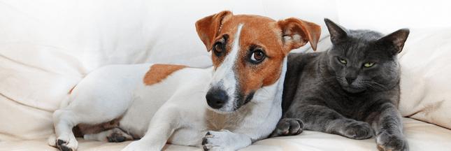 Les premiers gestes de secours pour sauver son animal