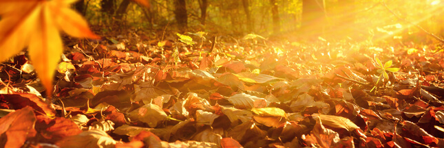 Automne au jardin : faire un terreau de feuilles mortes