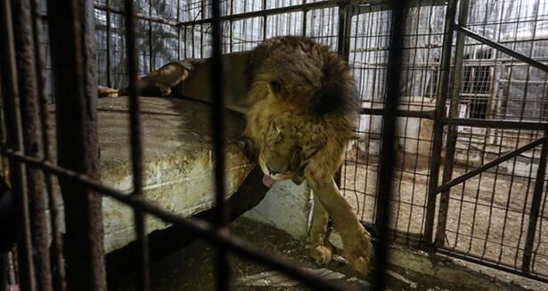 zoo de gaza, souffrance animale