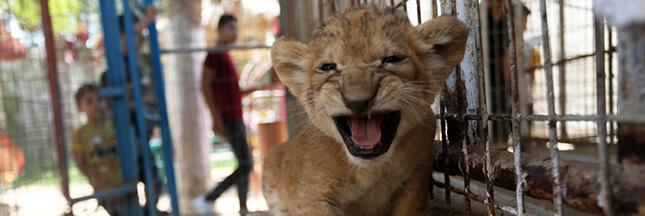 Dans le zoo de Gaza, des animaux en souffrance totale