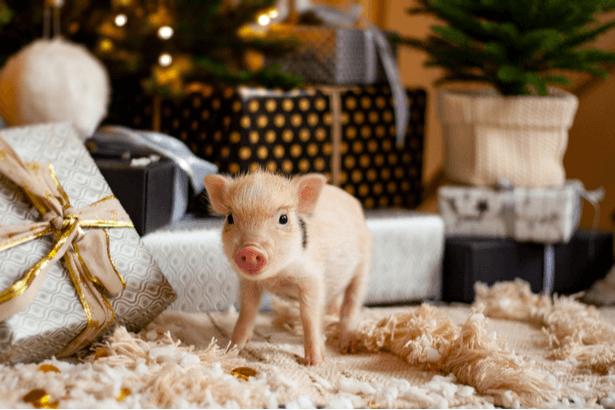 vétérinaire NAC, nouveaux animaux de compagnie