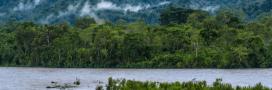 Trésors vivants d'Amazonie: protégeons ces terres!