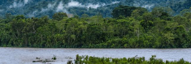 Trésors vivants d'Amazonie : protégeons ces terres !