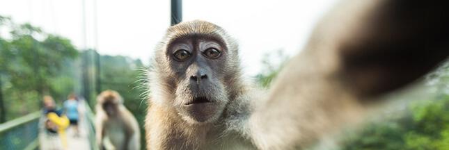 Prenez-vous en selfie avec une peluche pour le Costa Rica !