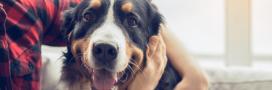 Un statut de « personne animale »: 7 Français sur 10 y sont favorables