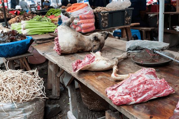 viande chien chine