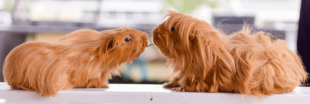 Les animaux de compagnie qui supportent mal la solitude