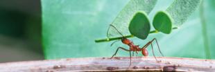Les pesticides dans les forêts françaises, c'est fini !