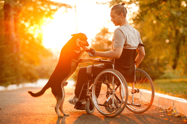allocation handicape novembre
