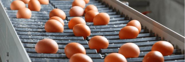 Mercosur - Les importations d'oeufs en Europe conditionnées au bien-être animal