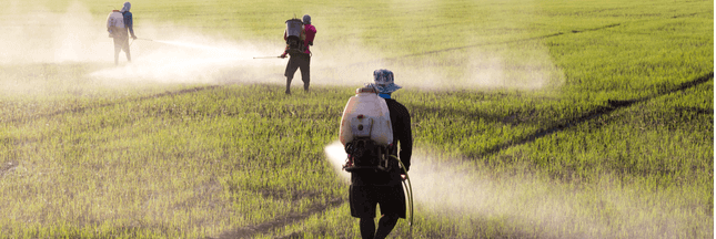 Trois pesticides dangereux interdits en Thaïlande