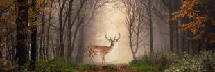 Ouverture du 11e Parc national français, entièrement dédié aux forêts