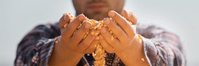 14% des produits agricoles gâchés avant d'arriver en rayon