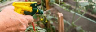 Encore trop de pesticides utilisés dans les maisons et jardins français