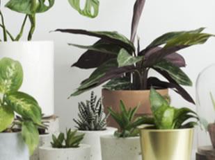 Calendrier des plantes d