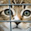11 animaux domestiques abandonnés toutes les heures : le Parlement veut agir
