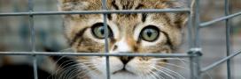 11 animaux domestiques abandonnés toutes les heures: le Parlement veut agir