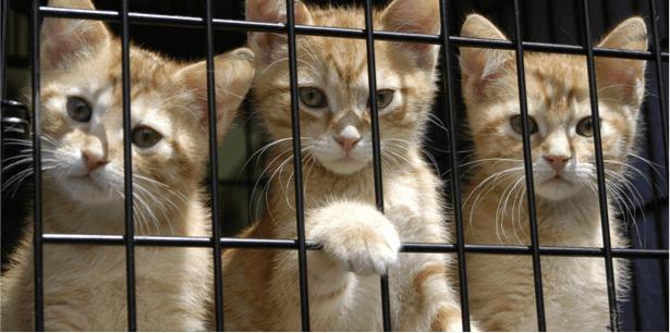 bien s'occuper d'un chat écoresponsable, chat écoresponsable