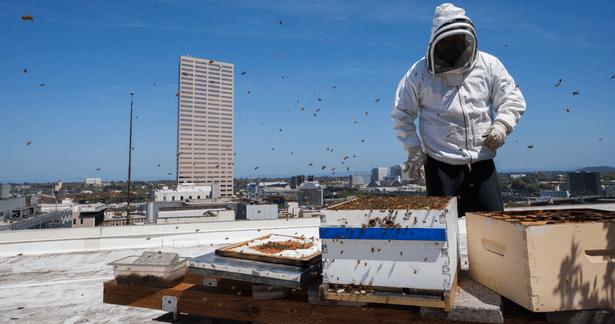 ruches en ville