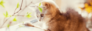 8 réflexes écologiques à adopter avec son chat