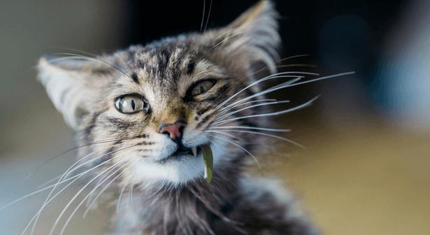 bien s'occuper d'un chat écoresponsable