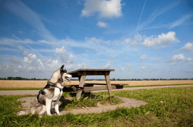 chien abandonne