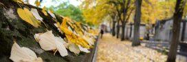 Balades insolites dans les cimetières d'Europe