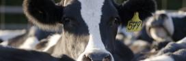 Victoire pour les riverains: avis défavorable pour l'extension de ferme aux 1000 vaches de Houlbec-Cocherel