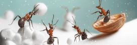 Que deviennent les insectes en hiver?