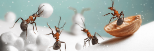 Que deviennent les insectes en hiver ?