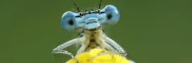 Les insectes sont bel et bien en train de disparaître