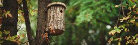 Pour aider les oiseaux, installez des nichoirs!