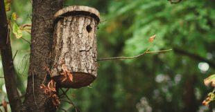Pour aider les oiseaux, installez des nichoirs !