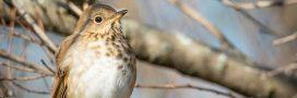 Un simple oiseau pour prédire les tempêtes tropicales