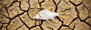 À Dubaï, on élève du saumon en plein désert