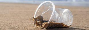 Plastique : le génocide des Bernard-l'hermite