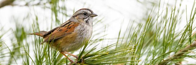 Il fait de plus en plus chaud, et les oiseaux migrateurs rétrécissent!