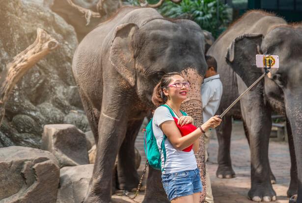 elephant touriste