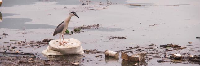 Plastique à usage unique: l'Assemblée nationale dit non…  mais pas avant 2040!