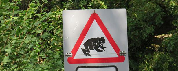route fermée grenouilles bretagne